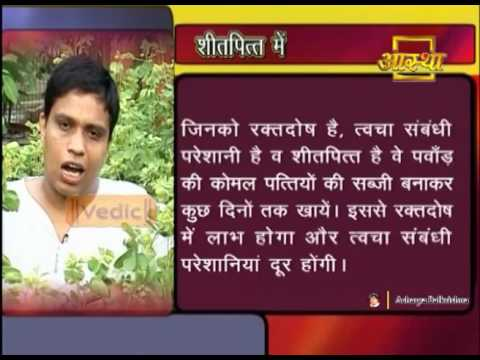 Ayurvedic Benefits of Cassia Tora(Pawad) for Urticaria Causes | Acharya  Balkrishna