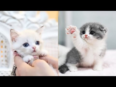 ❤️Aww - Funny and Cute Dog and Cat Compilation 2019❤️
