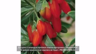 ягоды годжи цена за 1 кг