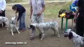 10-ая юбилейная Всероссийская выставка охотничьих собак. Младший ринг.