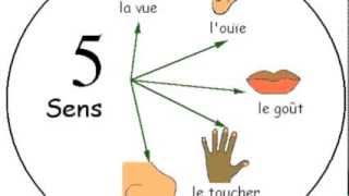 A song about the 5 senses in French.