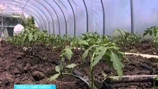 Создать тепличное хозяйство на Кубани может каждый