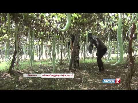 Sivagangai farmers grow vegetables through organic farming