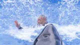 In Memory Of Dawn Brancheau, Killer Whale Attack SeaWorld, Orlando