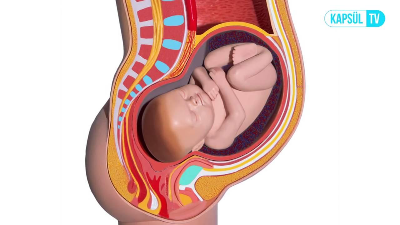 Download Gebeliğin 38. Haftası Anne ve Bebekte Ne Gibi Değişiklikler Olur?