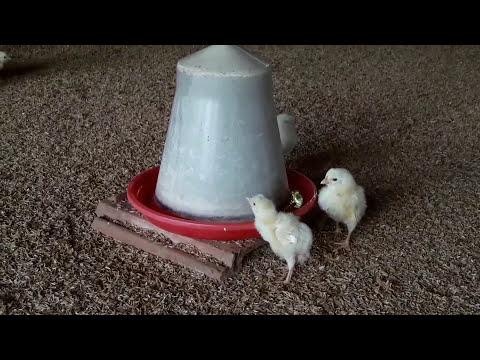 Low cost poultry farm construction. (कम लागत से बना  मुर्गीपालन फार्म)