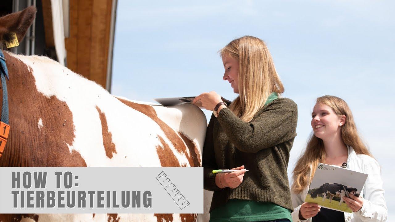Download How to: Tierbeurteilung mit Dorothee Warder