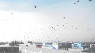 птички летят