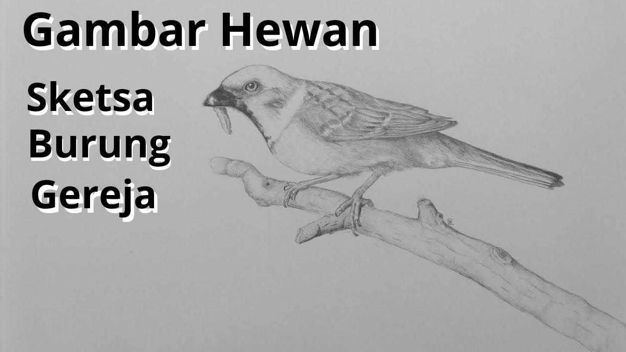 Gambar Hewan Sketsa Burung Gereja
