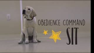 Obedience Command - Sit