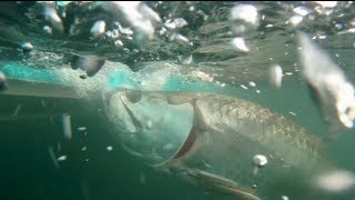 Reel Time Florida Sportsman - Stuart Tarpon and Snook - Season 1 Ep. 12 RTFS
