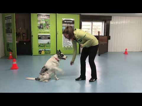 Intermédiaire Tricks Dog Kiss - DMWYD