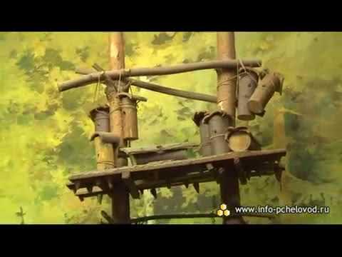 История современного пчеловодства