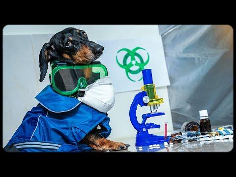 World Hysteria! Cute & funny dachshund dog video!