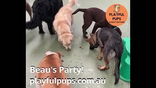 Beau's Party!