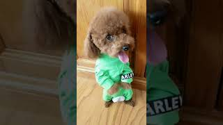 Look at these cute and funny puppies dogs 3189