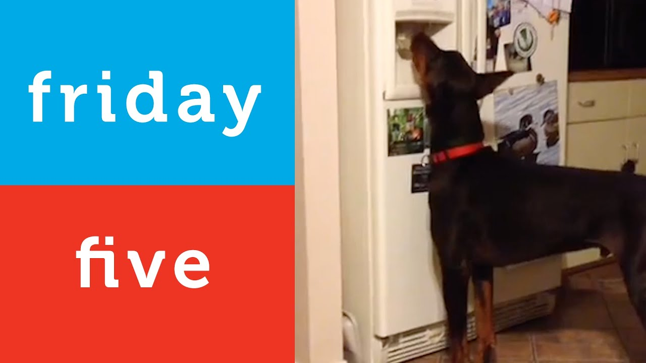 Dog Stuffs Teddy Bear Into Kennel And More Petco Friday 5