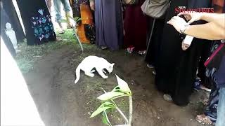 Cat's long walk to the grave of his loving master