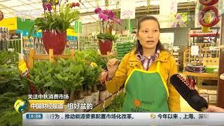 [中国财经报道]关注中秋消费市场 中秋临近 盆栽礼品花热销| CCTV财经
