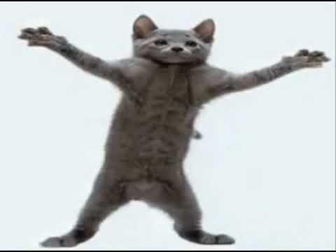 Dancing Cat [Teach Me How To Dougie]