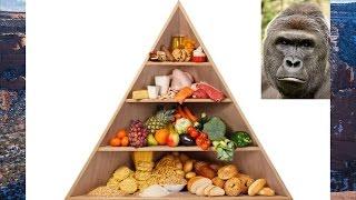 Diet & Body Composition - Is A Calorie A Calorie?