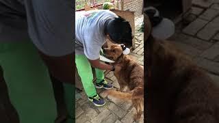 Así se Celebró El Dia Mundial Del Perro en mi Albergue , sucedieron cosas muy espectaculares