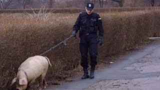 POLSKA POLICJA / JP