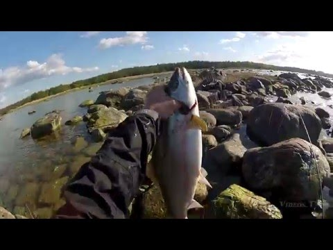 How To Kill A Fish After You Catch It
