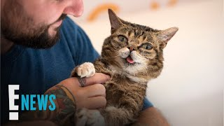 Internet Sensation Lil Bub Dies at Age 8 | E! News