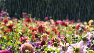 Kaiser Chiefs - Flowers in the rain (lyrics)