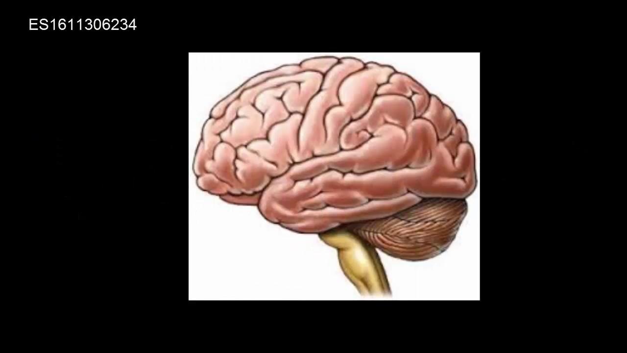 Preguntas Anatomia y Fisiologia 2 - YouTube