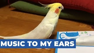 Cockatoo Sings Television Theme Song