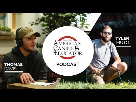 No Bad Dogs Podcast - Dog Training Advice with special guest Tyler Muto