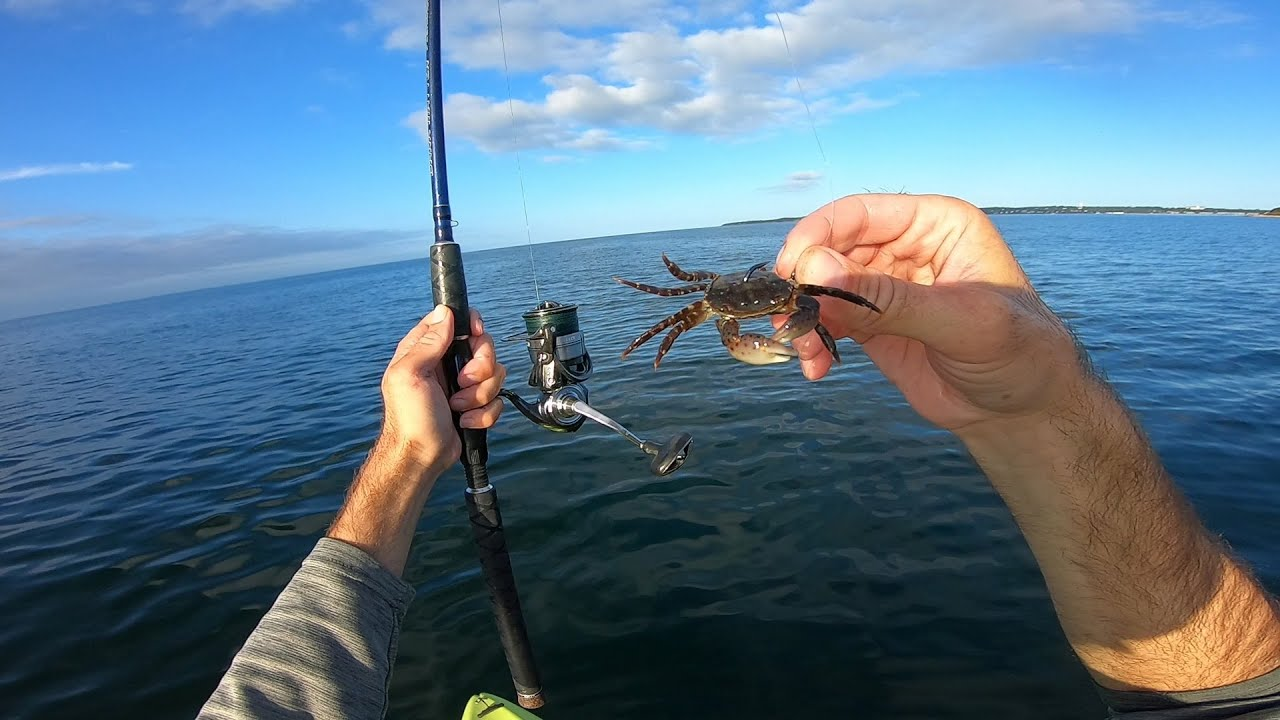 Invasive Crab Makes Excellent Bait to Jig a Limit - Fall Kayak Bottom Fishing