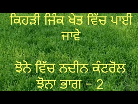 Weed control in Paddy (Paddy part 2)