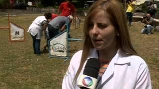 Conheça O Projeto Cães Doutores No Hospital Barão De Lucena