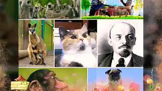 Люди и животные. Сходства. Природный юмор.