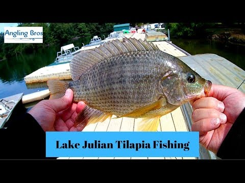 Tilapia Fishing!!! (Lake Julian NC Heating Up!!!)