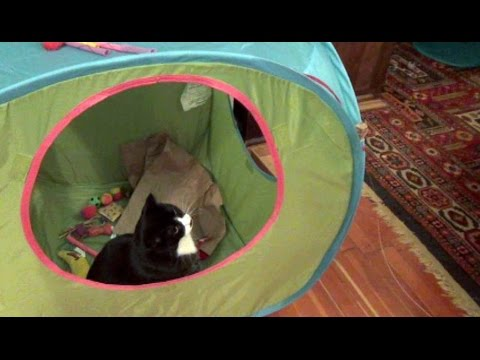 IKEA Kids Tent & Cats vs. IKEA Kids Tent - YouTube