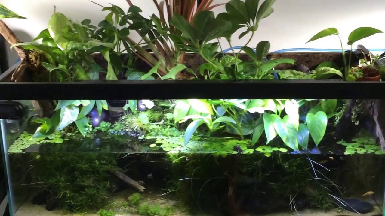 Freshwater Aquatic Plants