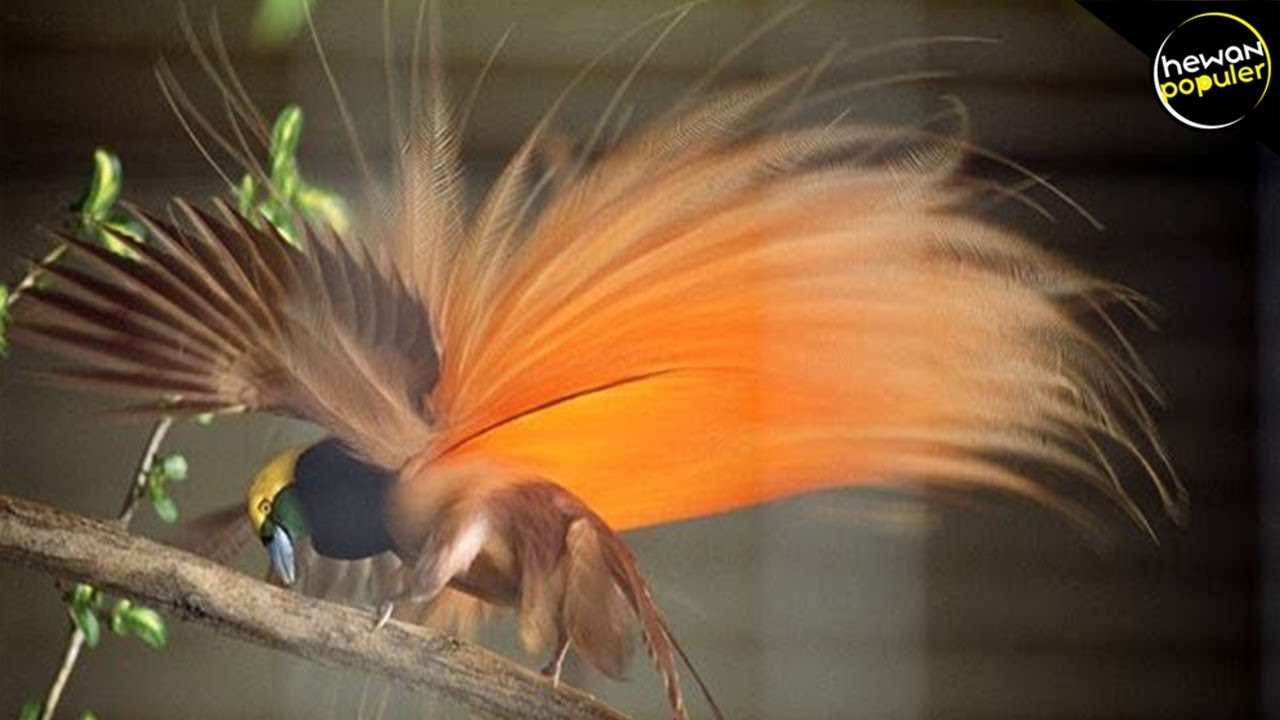 5700 Gambar Burung Rajawali Terindah Di Dunia HD Terbaik