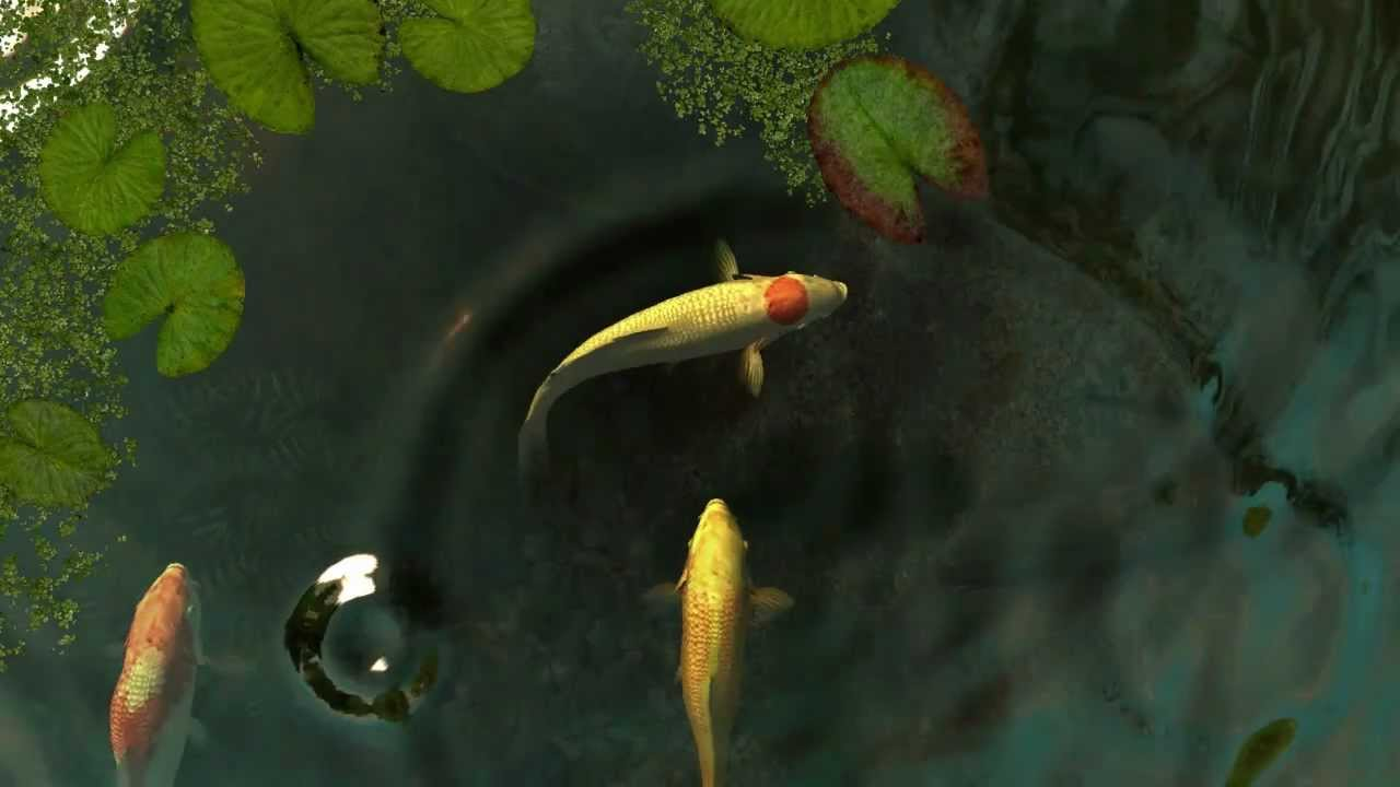 Koi fish 3d screensaver youtube for Moving fish screensaver