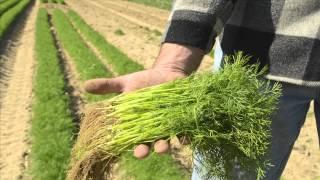 Marolda Farms: QR Spot