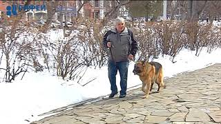 Правила выгула собак