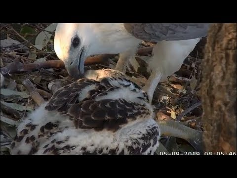 WBSE ~ WOW! SE24 **MANTLES** A Fish! AND Eats A Big Breakfast!! 9.5.19
