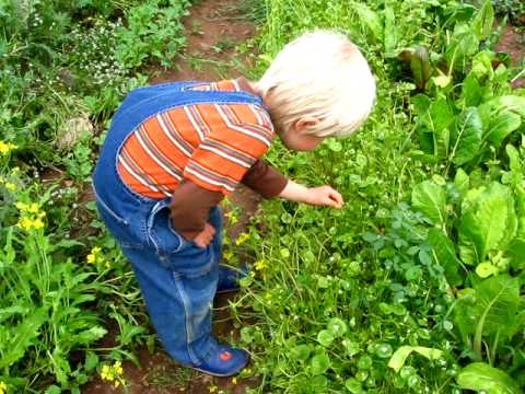 The 4yo boy who loves to eat greens - Suzy's organic greenhouse 4.30.10