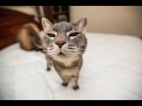 Funny Cats Compilation (Most Popular) Part 1