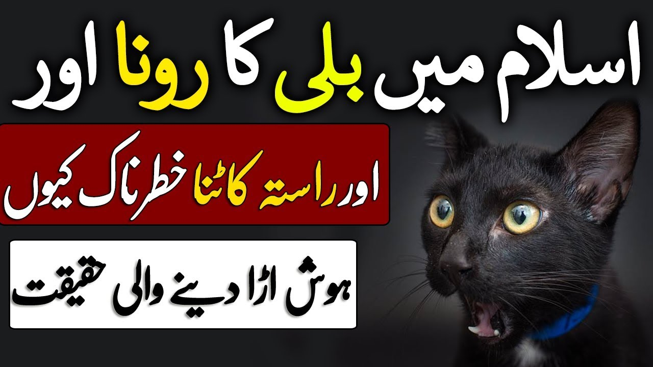 Billi Ka Rasta Katne Se Kya Hota Hai | Billi Ka Rona Kesa Hai In Islam |  Cat | Popular Quotes