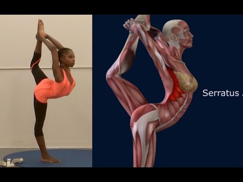 How To Lord of The Dance Pose, Natarajasana, Yoga Pose, Muscle Anatomy Routine EasyFlexibility