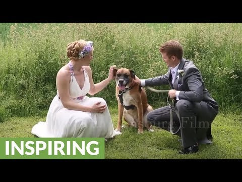 Bride's dog shows up for photo shoot on wedding day